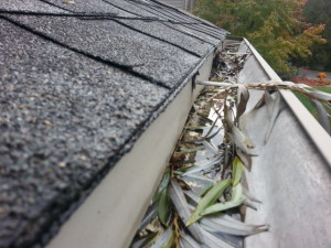 Gutters needs cleaning